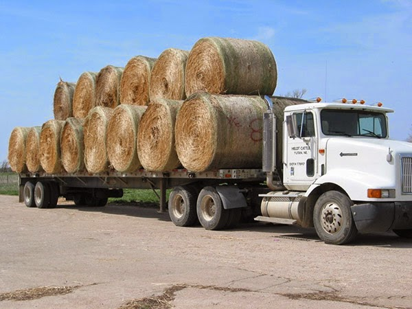 Truck carrying hay bales