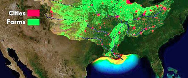 Graphic showing nutrient runoff at the base of the Mississippi River