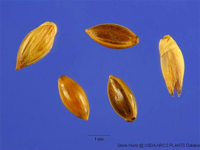 Five seeds spread out across blue background