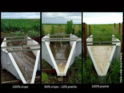 Three photos showing water quality change from crops to prairie, with dirty water in the crops photo and clear water in prairie