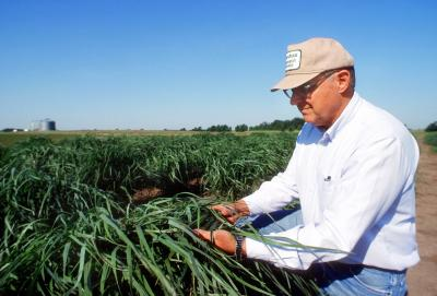 Ken Vogel tending crops in the field.
