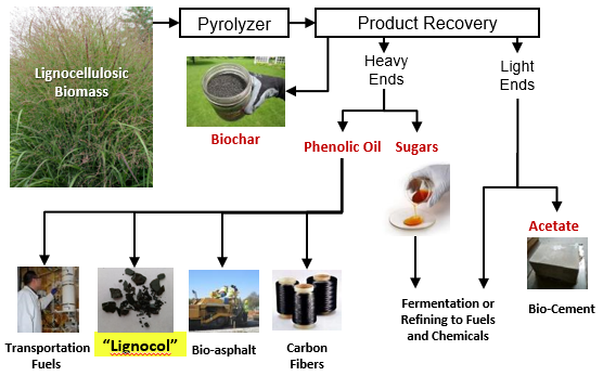 Infographic showing uses for Lignocellulosic Biomass
